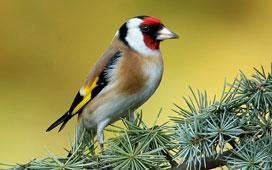 Photo oiseau animal
